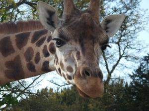 cala-millor-safari-zoo